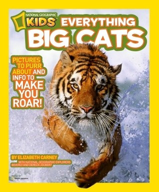 Everything Big Cats